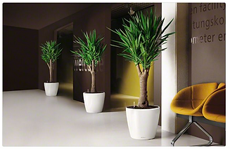 Office Plants London