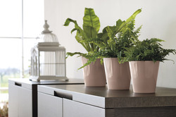 Office Plants Interior Plant Displays (3)