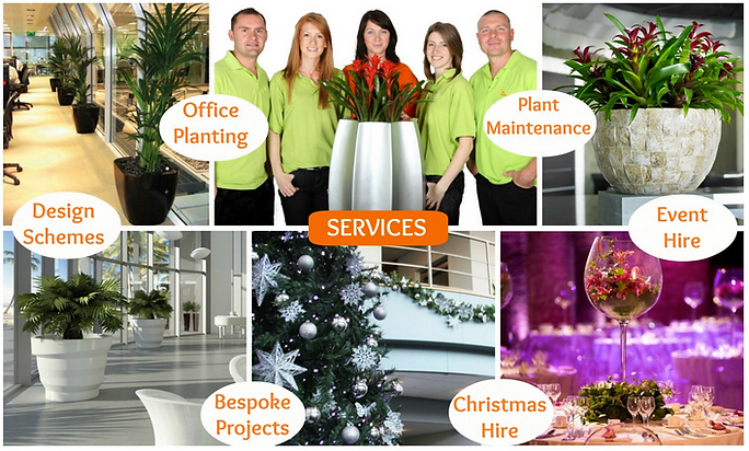 Office Plant Services