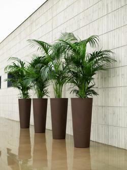 Office Plants Interior Plant Displays (8)