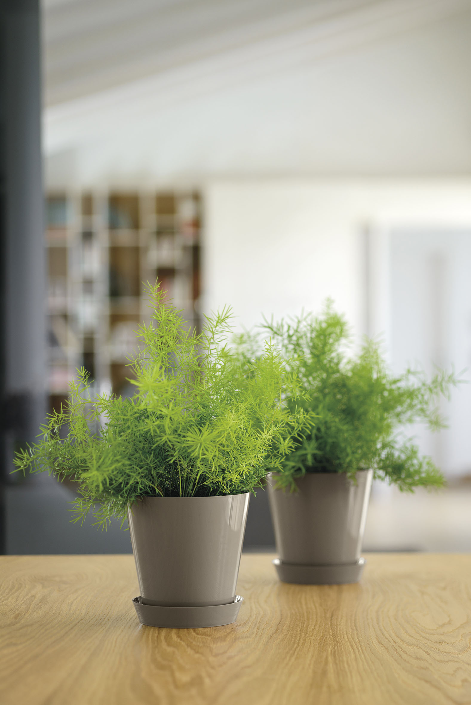 Office Plants Interior Plant Displays (5)