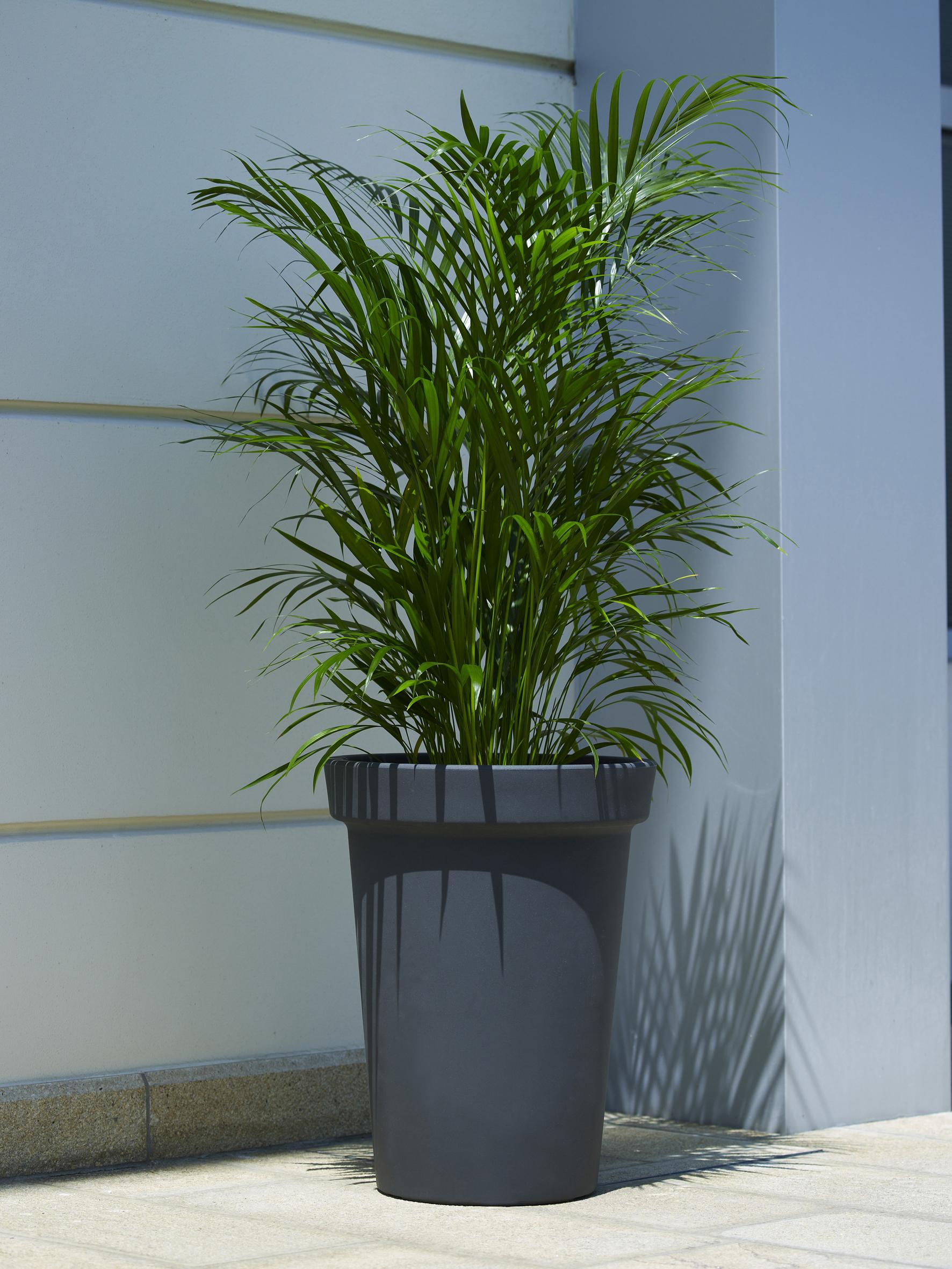 Office Plants Interior Plant Displays (11)