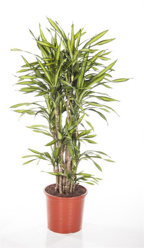 Live Plants