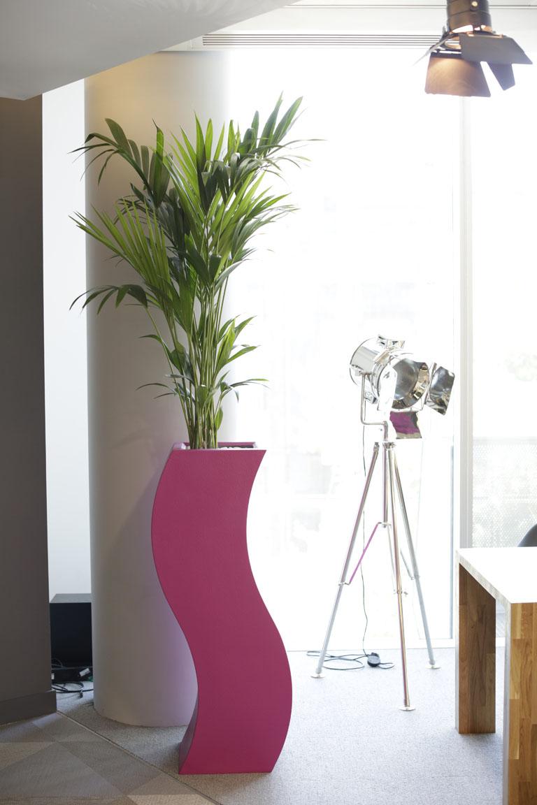 Fuchsia Pot