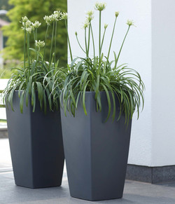 Tall Spiked Plants