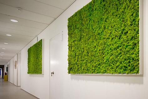 Moss Walls Funky Yukka (4)