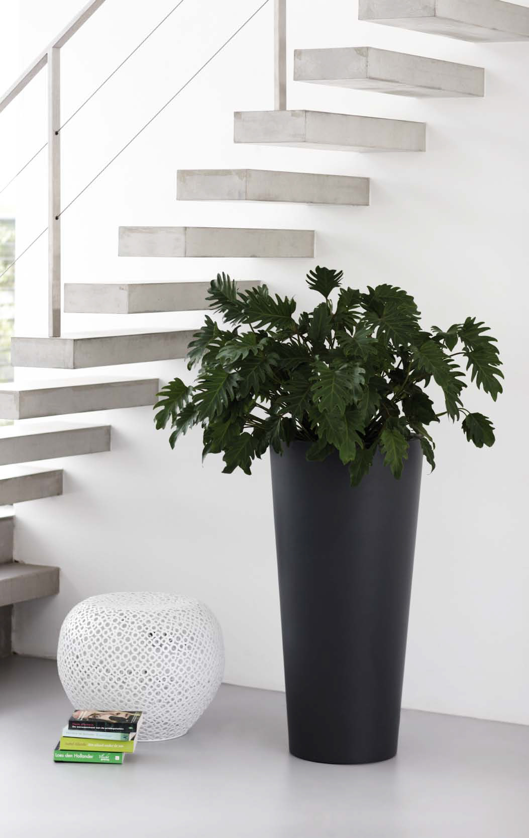 Workplace Plants