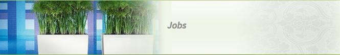 Funky Yukka Jobs