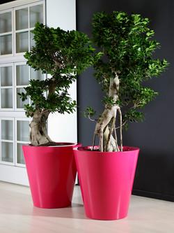 Office Plants Interior Plant Displays (9)