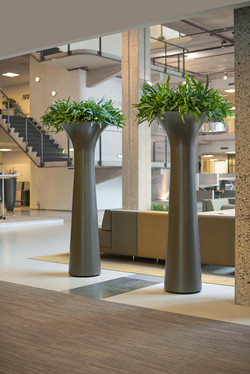 Fluted Feature Plants