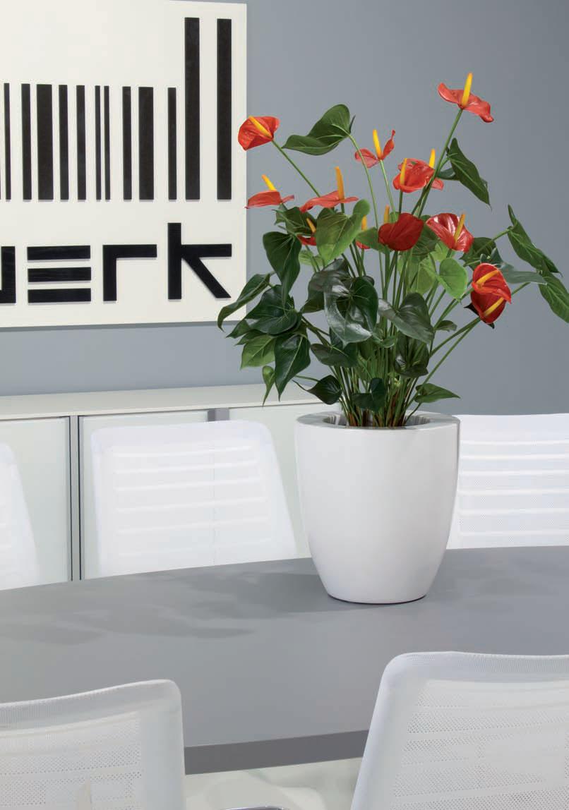 Flowering Plants Funky Yukka (5)