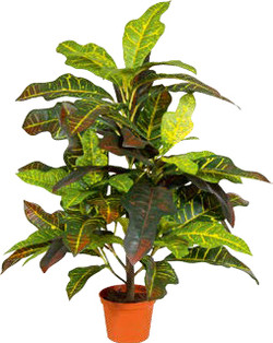 Artifical Plants for Offices Funky Yukka (40)