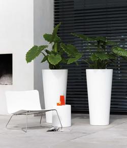 Workplace Plant Displays (5)