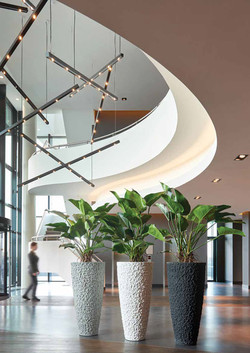 Plants for Reception Areas (5)