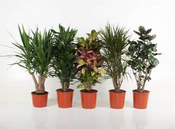 Assorted Plants