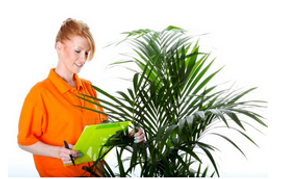 Office Plants Procurement and Tenders