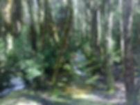 Wilderness at Cradle Mt