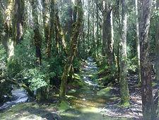 West Coast wilderness