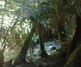 Rainforest west coast