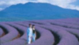 Lavender Farm Launceston