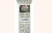 西日本新聞がばいキャラメル.png