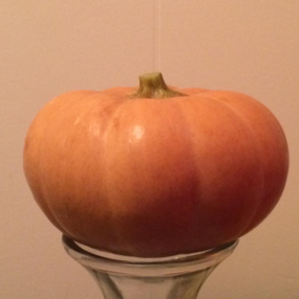 Butterkin Squash - Delightful cross of butternut & pumpkin