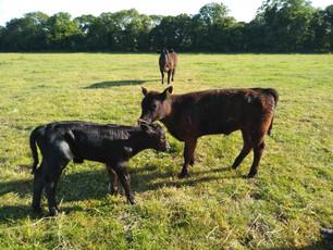 Pennyhooks Farm (4).jpg