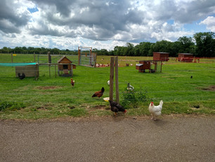 Pennyhooks Farm (11).jpg
