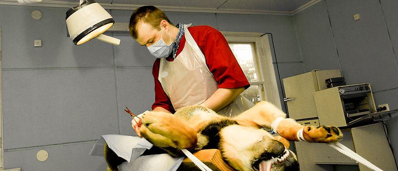 Reio Michelson koera steriliseerimas