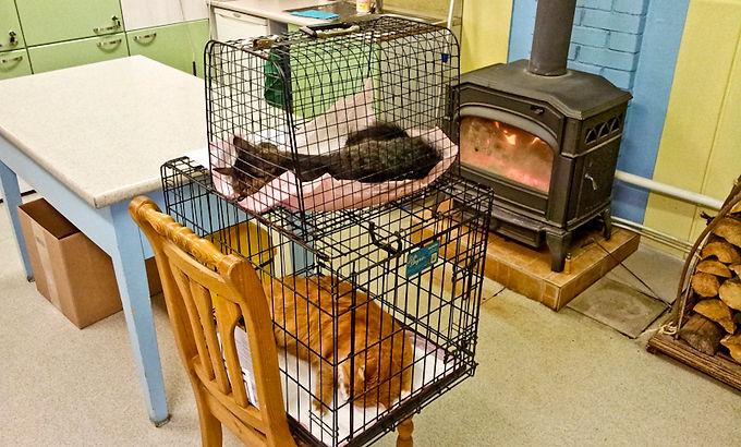 kaitse põll steriliseeritud kassile