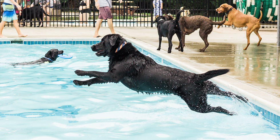 LRGR PUPS IN THE POOL