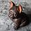 Thumbnail: Staring Pug Teapet