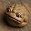 Thumbnail: Golden Toad Teapet