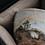 Thumbnail: Flame Cloud Pavilion Teacup