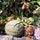 Thumbnail: Tea Kelolo