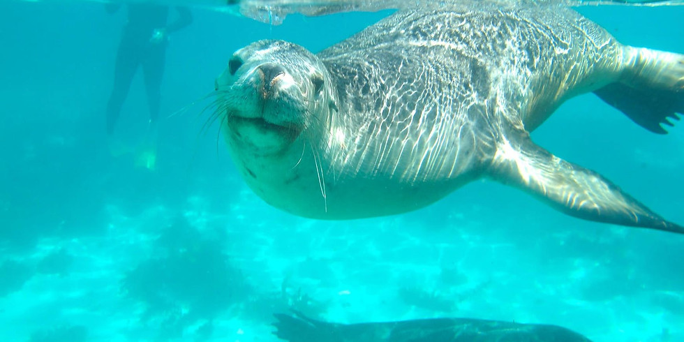 Carnac Family Day (Social Event) - Snorkeling, paddle, SUP, swimming with the seals
