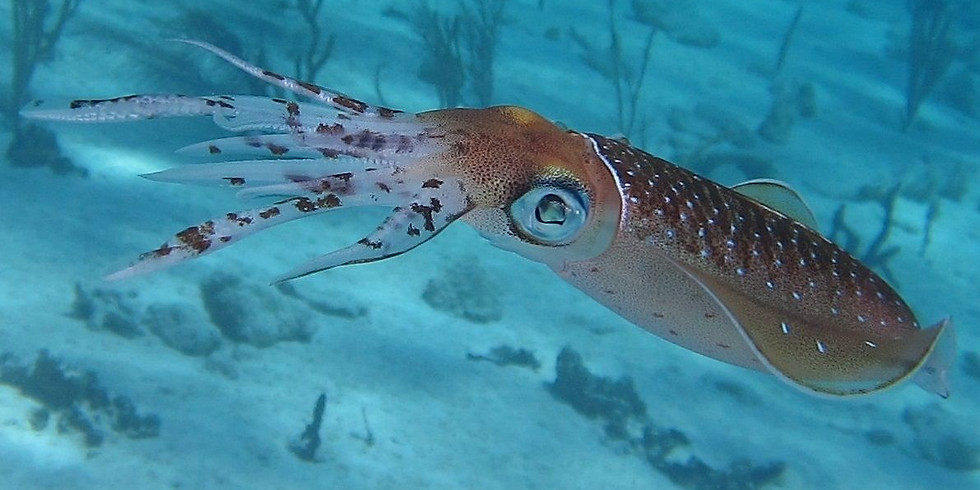 Squid Trip