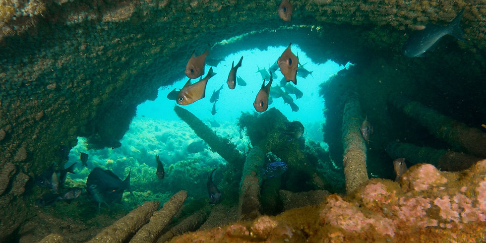 Orizaba & Christmas Caves Double Dive