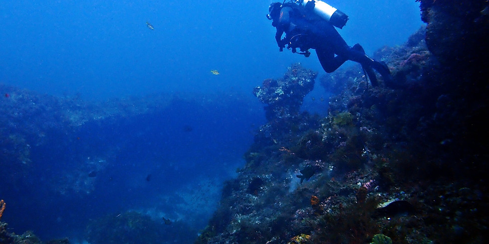 Rottnest Swim Through, A Family Day - Cigar Reef & Jackson's Rocks (Double)