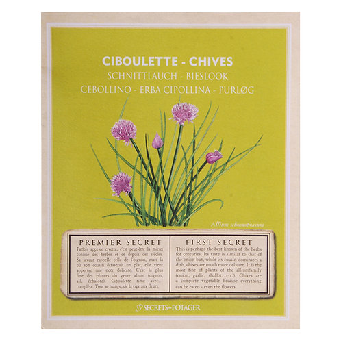 Chive seeds