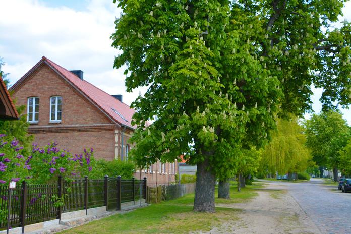 Dorfanger Wilkendorf