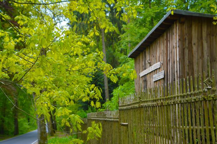 Wild & Wald in Wilkendorf