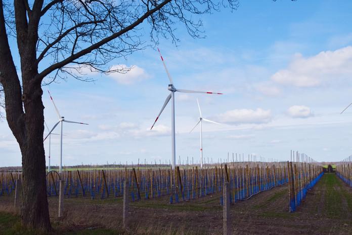 Windkraft-Obstbau.JPG