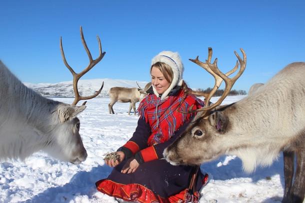 Feeding the reindeer at Tromsø reindeer camp