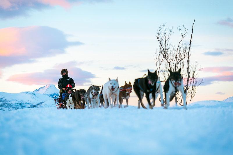 Husky sledding Tromsø