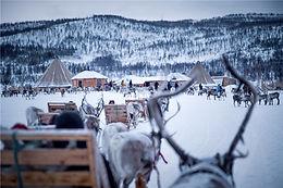 Short reindeer sledding, feeding and Sami culture