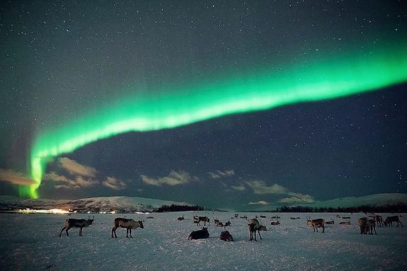 Night Reindeer sledding and Sami Camp Dinner