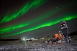 Husky sledding under Nothern lights