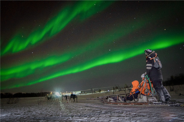 Husky sledding under Nothern lights