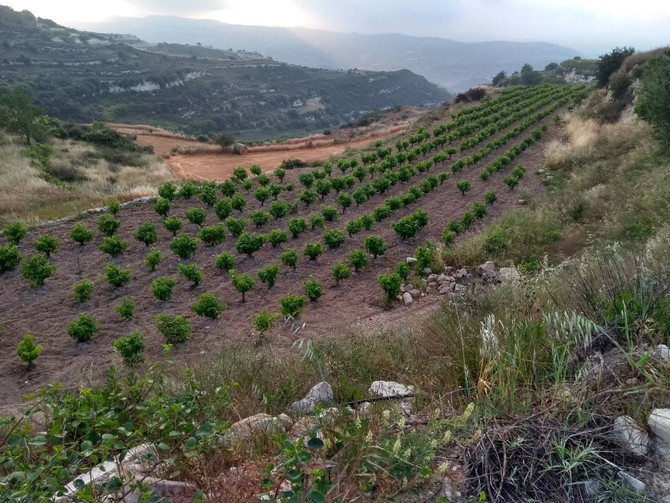 Monolithos Wine Dimensions: May 2018